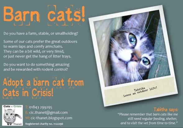 Barn cats postcard