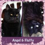 Angel and Fluffy