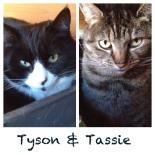 Tyson and Tassie
