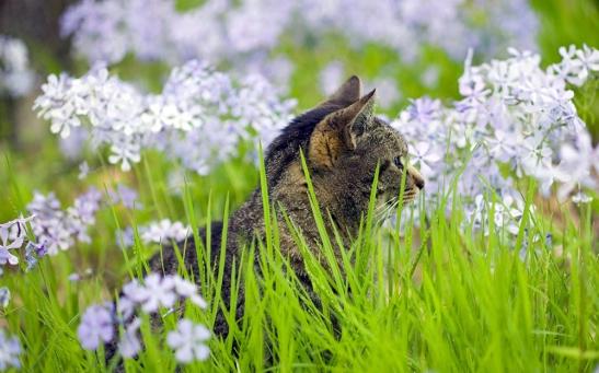 meadow-cat