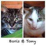 boris-tony