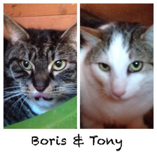 boris-tony