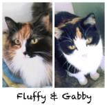 fluffy-gabby