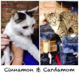 cinnamon-cardamom