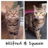 wilfred-squeak