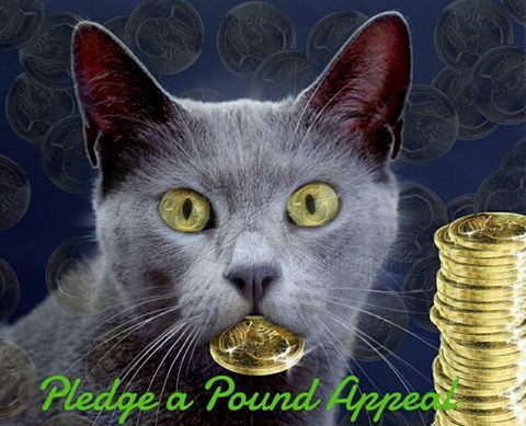 Pledge a pound