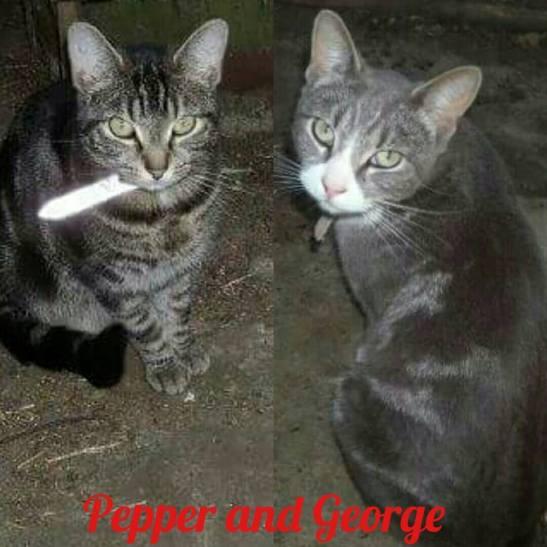 Pepper and George.jpg