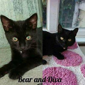 Bear and Diva