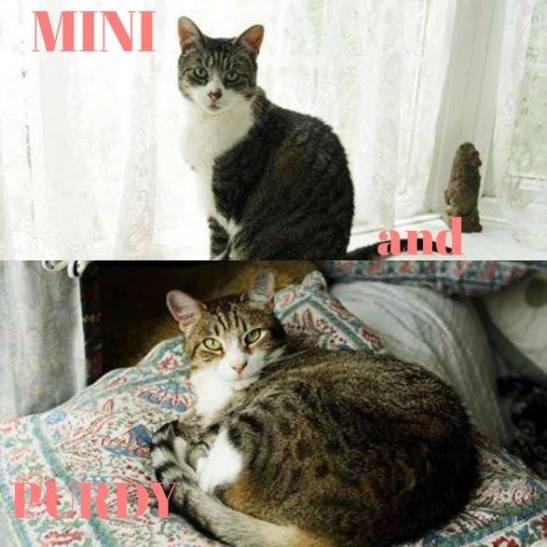 Mini and Purdy2.jpg