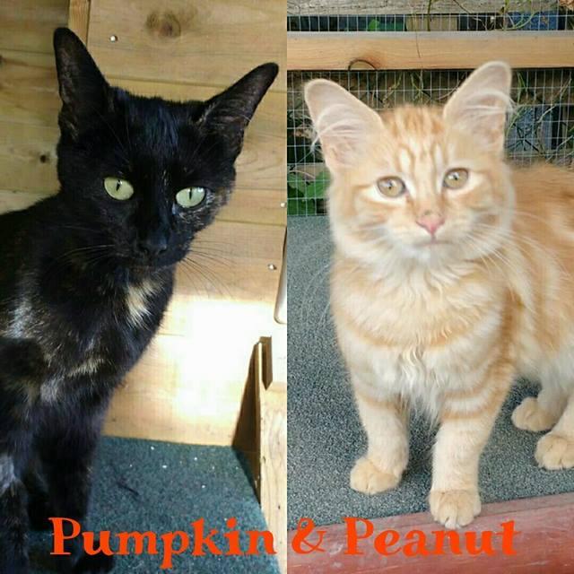 Pumpkin and Peanut