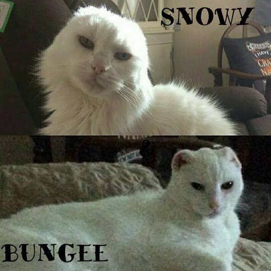 Snowy and Bungee