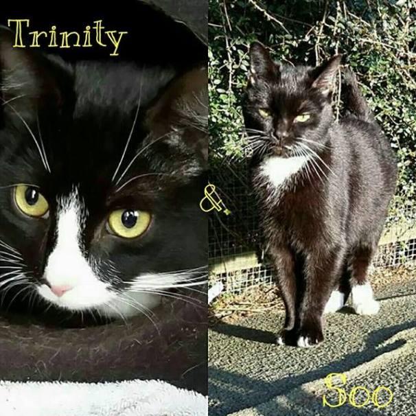 Trinity and Soo.jpg