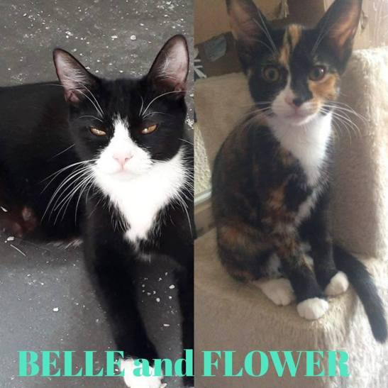 Belle and Flower