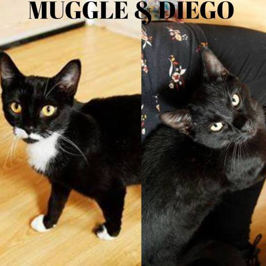 Muggle and Diego.jpg